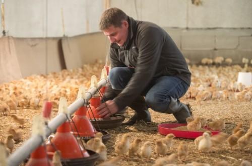 Los piensos para alimentación animal tuvieron alzas considerables en el pasado año