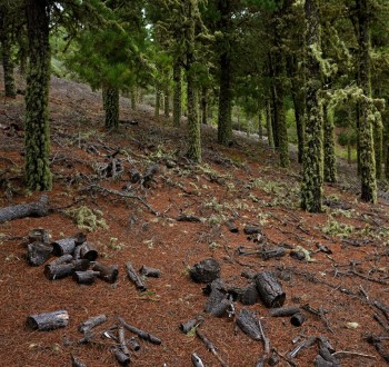 España se suma a la Declaración de Ambición 2025 contra la deforestación