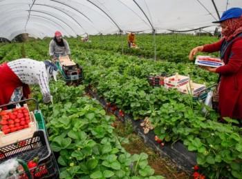 El descenso del paro registrado en Agricultura fue el menor desde 2009