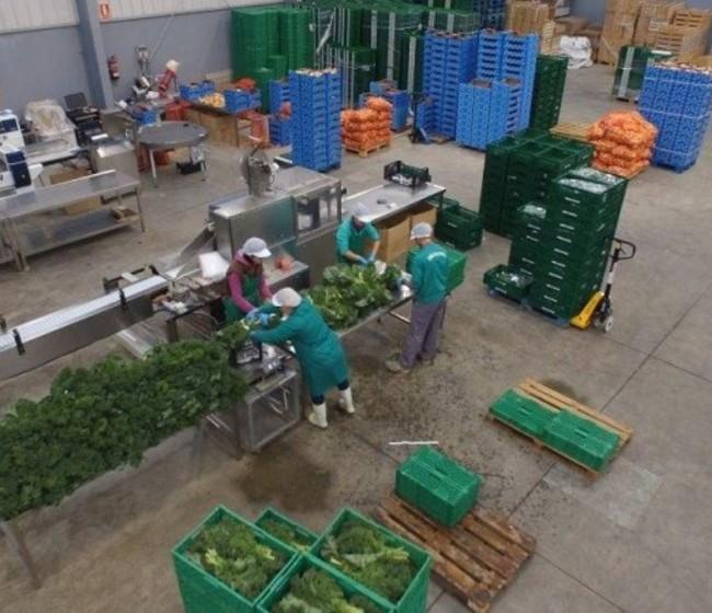 El MAPA pide a Bruselas 313 M€ para financiar los programas operativos de 2021 de las OP hortofrutícolas