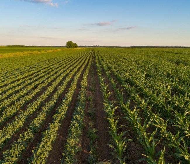 El MAPA publica un exhaustivo estudio sobre el acceso a la tierra para favorecer el relevo generacional