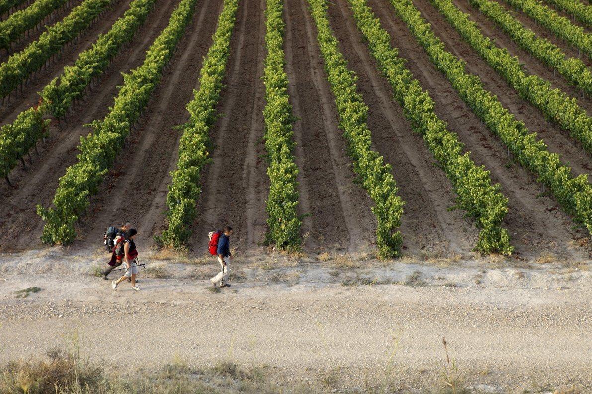 El MAPA flexibilizará en breve las normas sobre autorizaciones de plantación y potencial vitícola en 2021