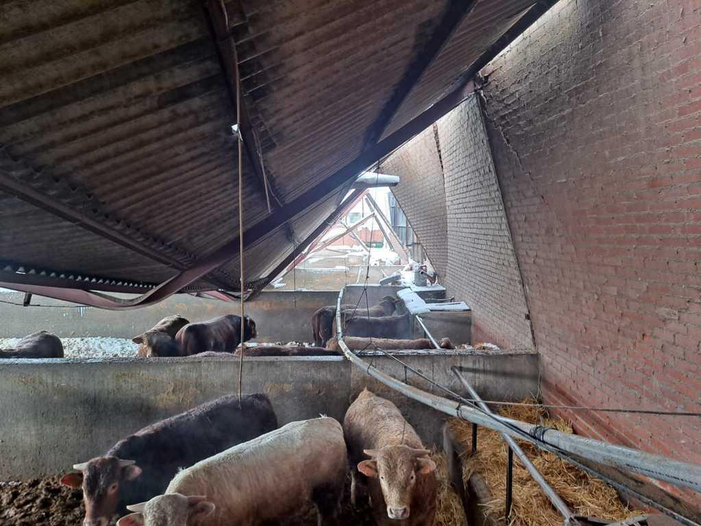 Filomena: Ugama alerta que aún quedan muchos animales aislados