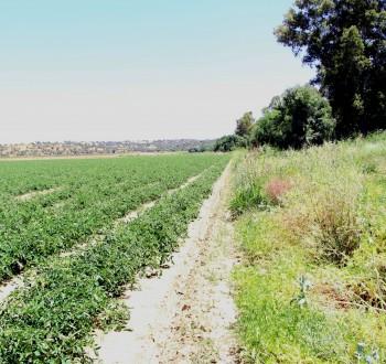 Bruselas publica una lista de prácticas agrícolas de potencial apoyo como eco-esquemas en la PAC 2023-27