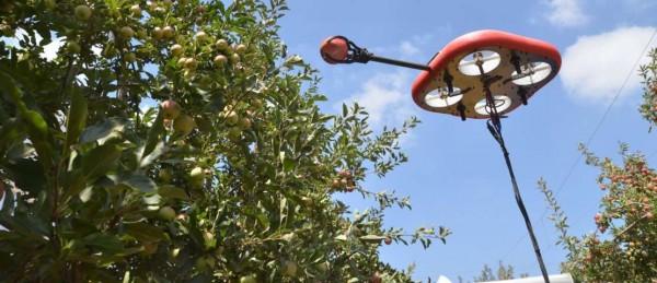 Kubota invierte en el desarrollo de drones autónomos para la recolección de frutas de Tevel