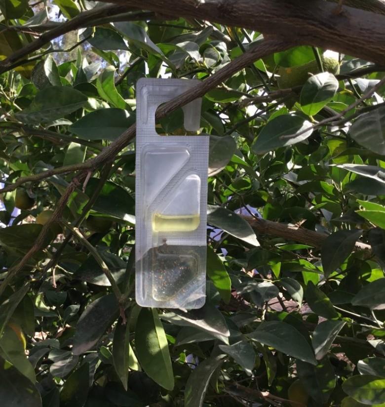 Vynyty Citrus, la solución de Bayer a base de feromonas para la lucha contra el cotonet