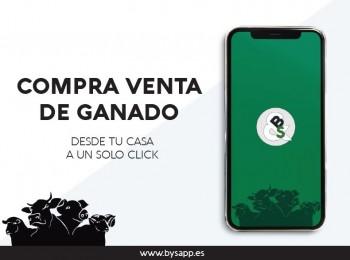 B&SApp, la nueva aplicación para la compraventa de ganado online