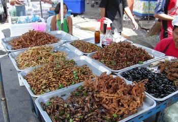 La Agencia Europea de Seguridad Alimentaria avala los insectos como nuevo alimento