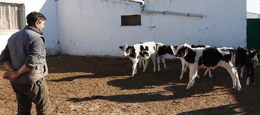 UPA pide a los ganaderos no firmar propuestas de contratos anuales con las lácteas por debajo de costes