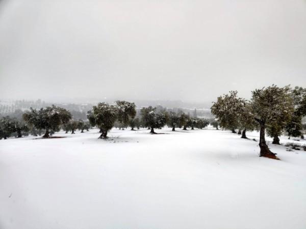 Agroseguro espera fuertes daños por heladas en diferentes zonas agrícolas