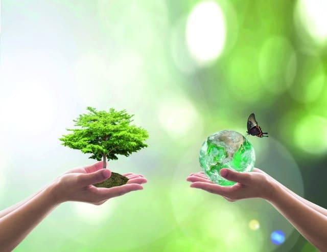 Afepasa recibe la medalla de oro de Ecovadis a la sostenibilidad