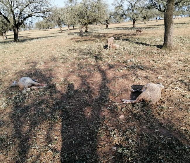 """Las OPAS anuncian movilizaciones ante el """"desprecio"""" a los ganaderos frente al lobo por parte del Gobierno"""