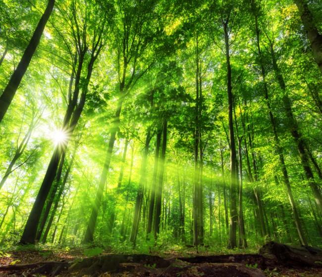 El biometano, clave en el crecimiento de Axpo Iberia