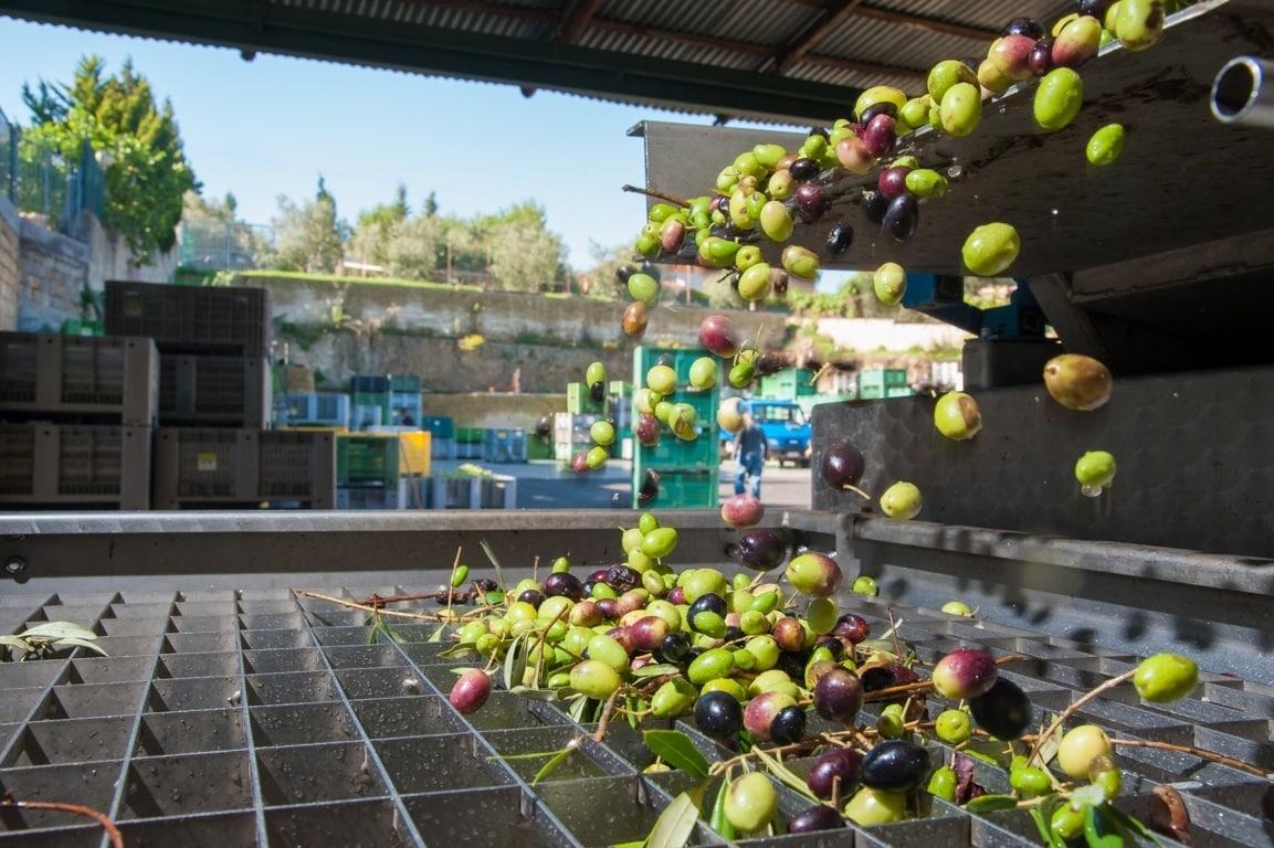 La revisión del aforo andaluz dejaría la producción nacional de aceite de oliva por debajo de 1,4 Mt en 2020/21