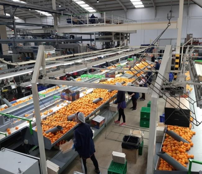 Cajamar observa una clara resiliencia del sector agroalimentario español frente a la crisis de Covid-19