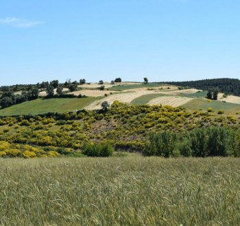 La UE-27 corre el riesgo de abandono de 5 Mha de superficie de tierras de aquí a 2030