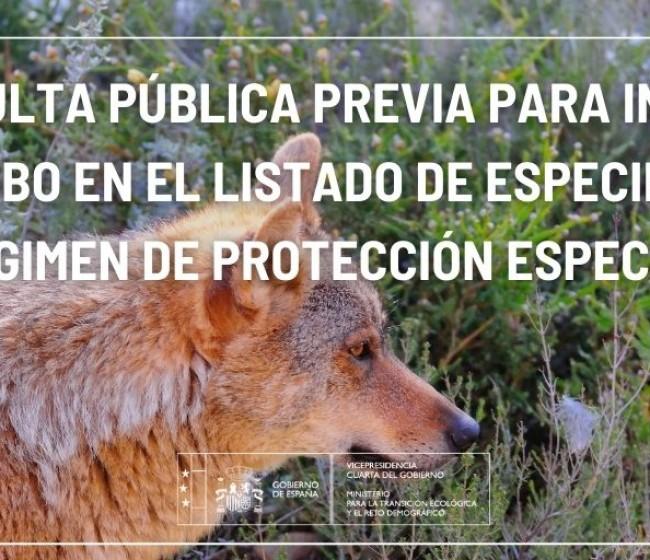 El Miterd abre ahora consulta pública previa hasta el 26-F sobre el proyecto de OM para elevar la protección del lobo