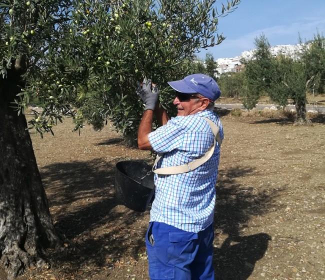 Los pequeños agricultores del régimen simplificado de la PAC percibirán cerca de 71 M€ de la campaña 2020