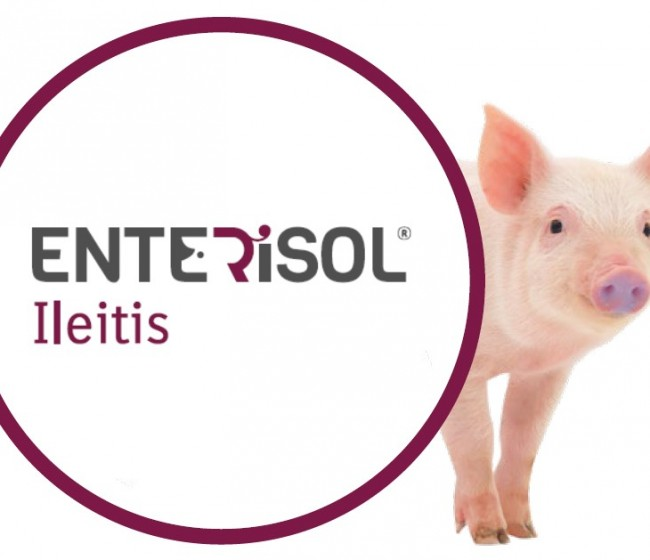 Enterisol Ileitis de Boehringer autorizada para reducir la Salmonella