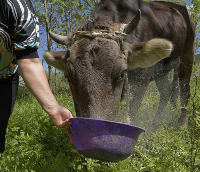 Aumento brusco del Índice FAO de precios de los alimentos básicos en enero