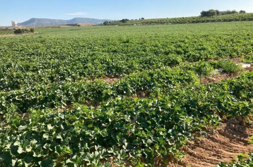 Unión de Uniones pide revisar la legislación sobre variedades vegetales protegidas