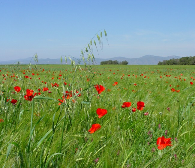 La Universidad de Lleida celebra su primer curso on line de identificación y manejo de malas hierbas en cereales de invierno
