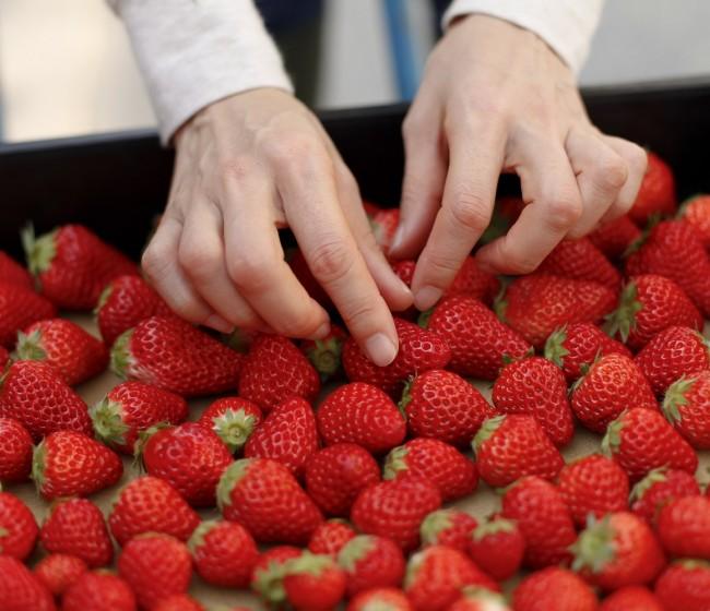 La pandemia de Covid-19 complicó la campaña 2020 de la fresa en los países productores mediterráneos