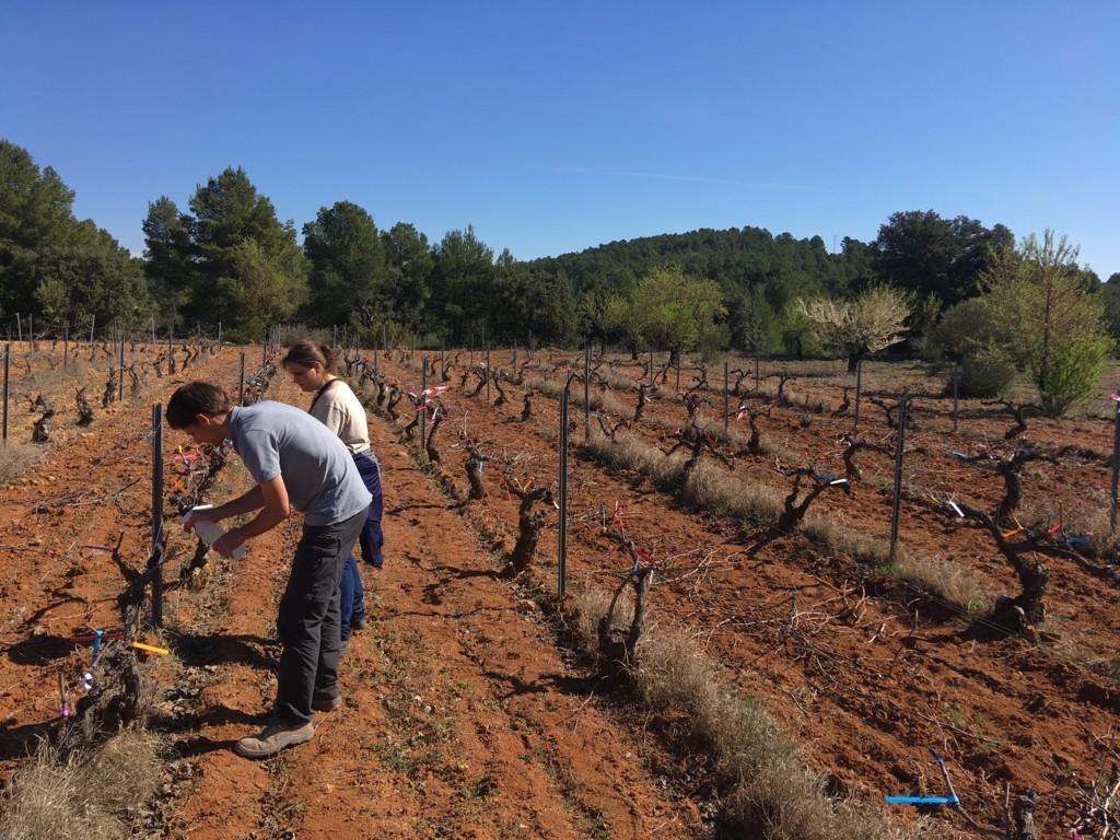 El MAPA destinará un millón de euros a la formación práctica de jóvenes agricultores y ganaderos