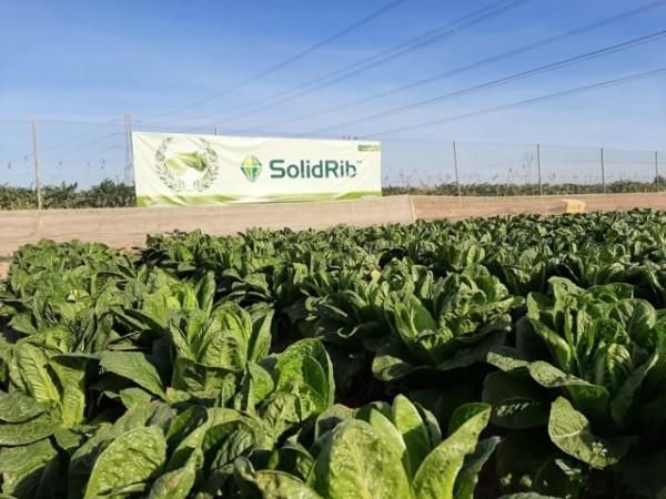 Últimas novedades de Syngenta en los principales cultivos de hoja