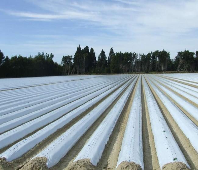 La entidad Cirplas Agroplásticos se encargará de gestionar los residuos plásticos agrarios no envases