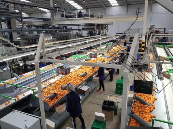 Impacto Covid-19: más de la mitad de las empresas agroalimentarias cree que las alianzas en el sector aumentarán