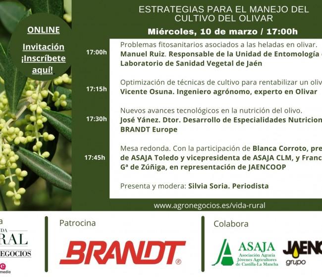 Vida Rural organiza un webinar sobre estrategias para el manejo del cultivo del olivar