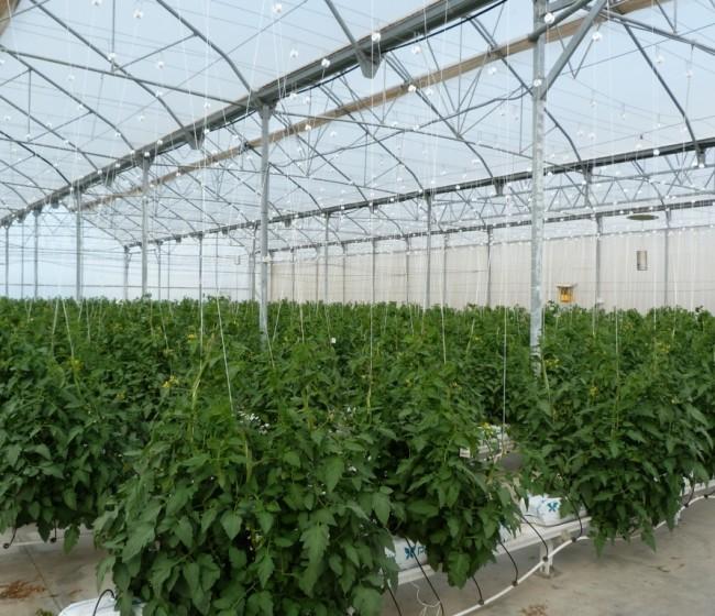 Andalucía apuesta por Kazajistán y Uzbekistán como mercados estratégicos para sus fertilizantes agrícolas