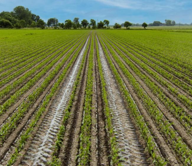 Lemken lanza un configurador de tramlines en línea para su sembradora Azurit 9