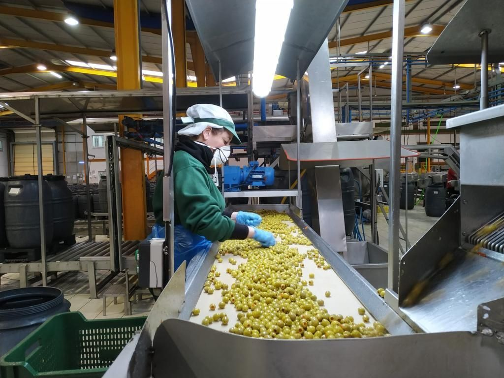 Cooperativas expone a la CE los retos del sector de la aceituna de mesa