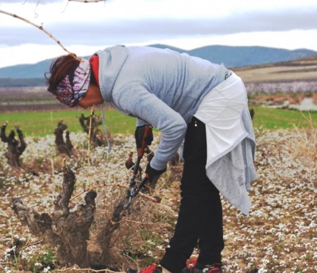 Unos 2.510 jóvenes agricultores perciben casi 11,6 M€ de derechos de pago básico de la reserva nacional de la PAC 2020
