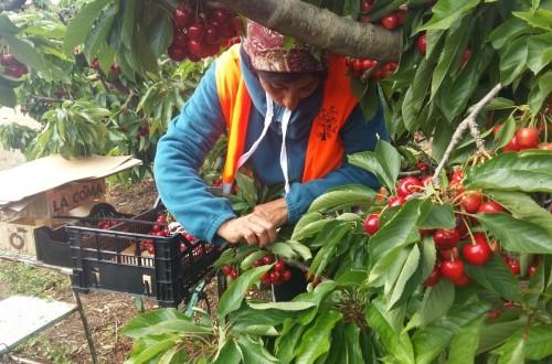 Aragón: casi un 15% de los empleadores frutícolas se arriesgan a sanción en la próxima campaña