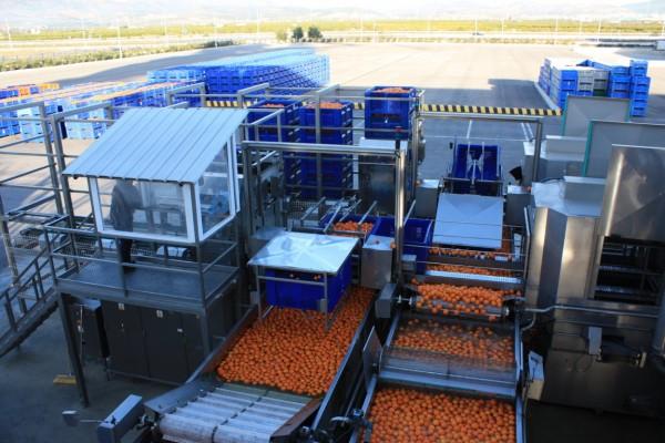 Andalucía concentra el 40% de todas las ayudas UE a los programas operativos de las OPFH en España