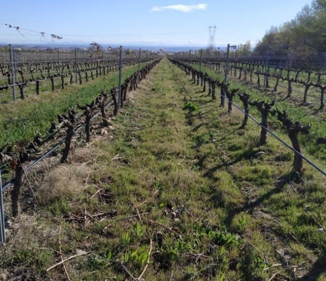 Presencia y evolución de potenciales vectores de Xylella fastidiosa en viñedos de La Rioja