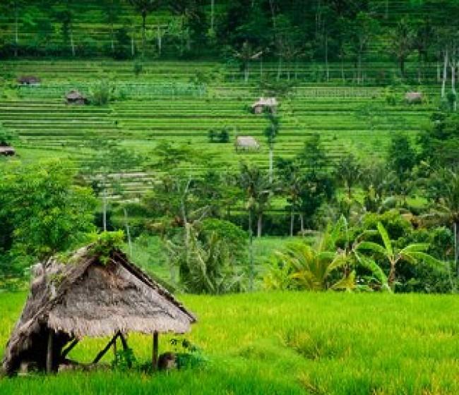 COPA-Cogeca denuncia que el arroz comunitario se ve amenazado por la política comercial de la UE