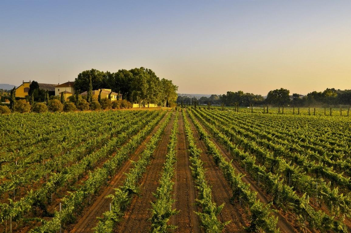 La superficie nacional vitivinícola bajó un 0,6% y quedó en casi 944.480 ha en la anterior campaña 2019/20