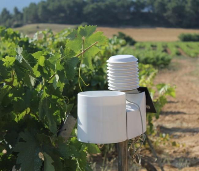 Agrigenio Vite, la solución de Basf para la gestión sostenible del viñedo