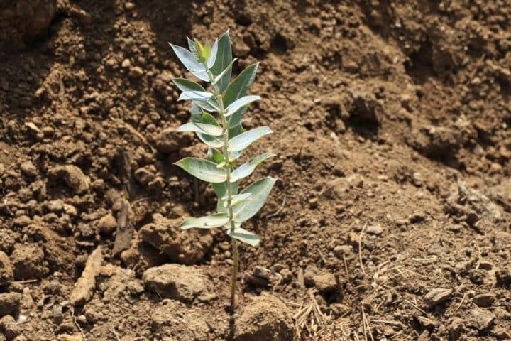 ICL presenta su nueva gama de fertilizantes encapsulados Agroblen Tablet