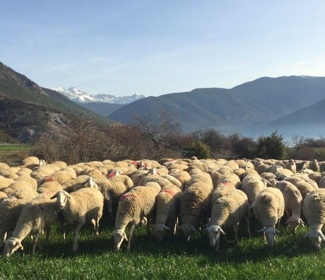 El MAPA prepara un RD que regulará la creación y funcionamiento de OPs en vacuno de carne y ovino-caprino