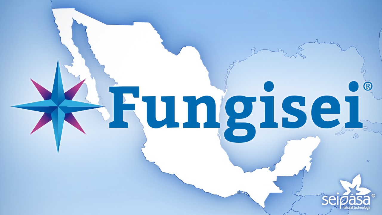 IMG_Fungisei_LR