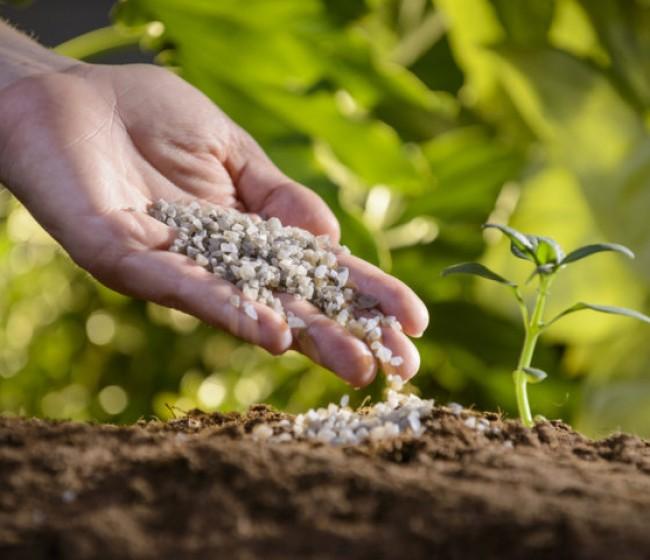 ¿Qué es POLYSULPHATE? Un fertilizante multinutriente S Mg K Ca