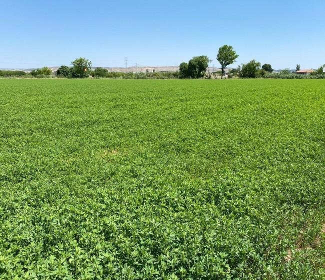 El sector agroindustrial de forrajes deshidratados elevó su producción casi un 4%, hasta cerca de 1,5 Mt en 2020/21