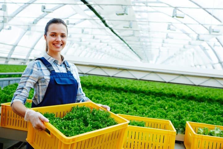 Salad greenhouse (FILEminimizer)