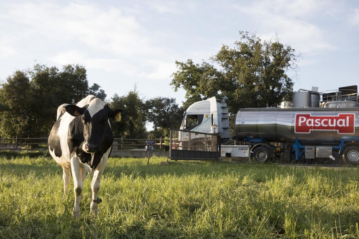 Los precios medios de la leche cruda de vaca en España cerca de la cola de la UE-27 en febrero
