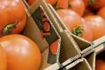 La industria española del cartón mantiene sus niveles de producción